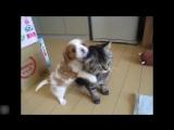 Дружба котов и собачек ...