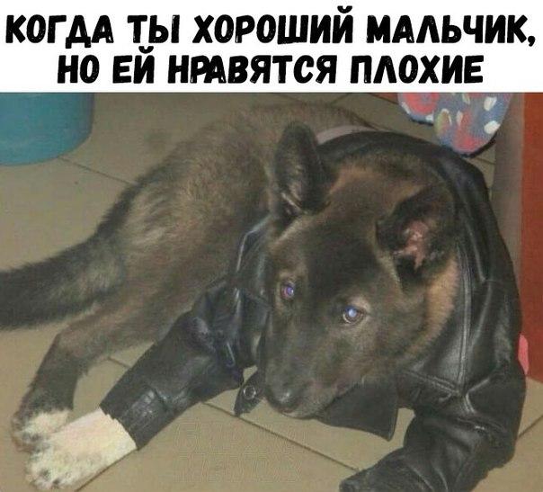Фото №456298792 со страницы Алексея Загорского