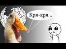 Настоящие правила русской Википедии. Уебали за то что крякает