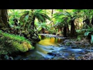 Австралия. Дикие острова