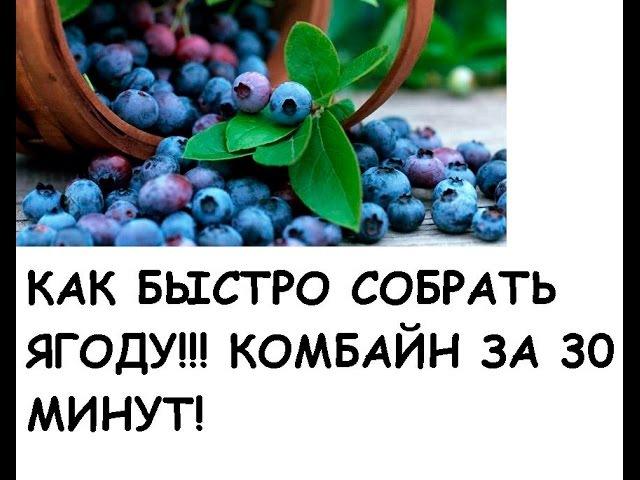 DIY-Стакан-комбайн для сбора ягод своими руками / Glassful -harvester for picking berries diy-cnfrfy-rjv,fqy lkz c,jhf zujl cdjb