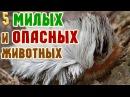 Самые опасные животные мира, планеты маньяки убийцы африки америки россии домашние жизнь тайны собака порода
