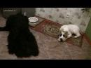 1 Пищевая агрессия и коррекция поведения щенка во время еды