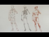 How to Draw a Man - Anatomy Master Class