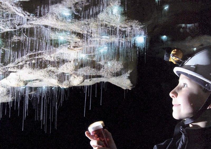 Вайтомо - пещеры светлячков в Новой Зеландии