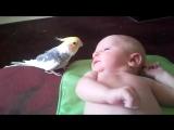 Попугай укладывает спать малыша.Так мило))