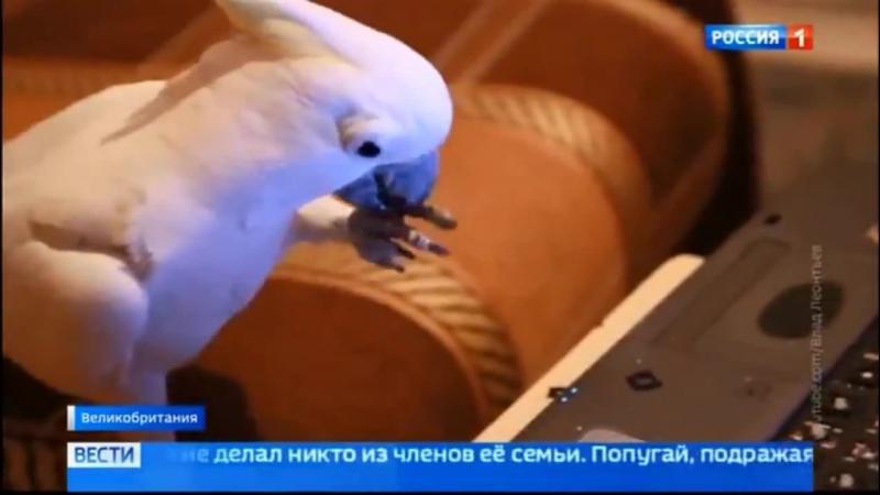 Лондон попугай через голосовой набор делает покупки в интернете