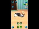 Виртуальная реальность IPhone Tamadog games