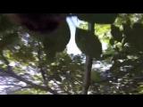 В Канаде белка украла GoPro и сняла документальный фильм о своей жизни