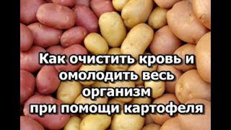 Как очистить кровь и омолодить весь организм при помощи картофеля
