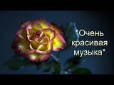 Очень красивая музыка Самая лучшая музыка для души + цветы