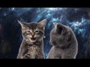 Крутая песня Про Кошек