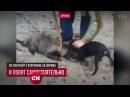 В Петербурге живодёры ради забавы издеваются над беззащитными животными