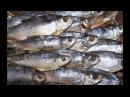 Как правильно солить рыбу Засолка рыбы Осторожно червь солитер