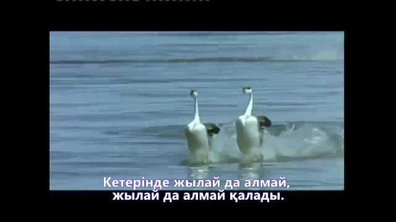 Нұрлан Өнербаев - Құстар қайтып барады