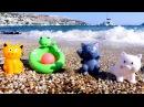 Kumda oyna! Bebek su oyuncakları. Denizde oyunlar kedicikler top oynuyor! Okul öncesi eğitici video