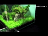 The Art of the Planted Aquarium 2015 - Scapers Tank (Nano) category, part 4