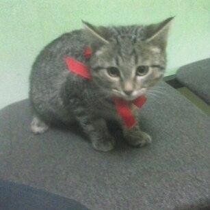 Админ опубликуй пожалуйста) найдены два милых пушистых кота, возрос 2,