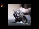 Котик в наслаждении