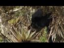 «Экватор 5. Парадокс Анд» Документальный, природа, животные, 2005