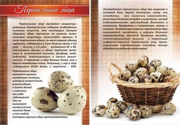 Скорлупа перепелиных яиц польза и вред