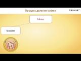 7. Жизненные процессы клетки. Их значение. Роль ферментов в обмене веществ. Деление. Рост и развитие клетки