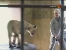 Animal Planet. Человек и львы 1-3 сезоны 1-43 серии из 43 / The Lion Man / 2004-2008 /12