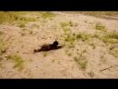 охота на мышь 3