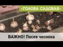 Голова садовая ВАЖНО Посев чеснока