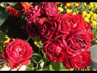 Розы, земляника