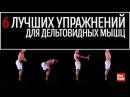 Операция отряда «Дельта»: работаем над мышцами плеч