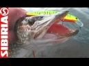 Ловля щуки на спиннинг на секретном озере на китайский воблер Удачная рыбалка о ...