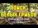 Поиск белых грибов. Открытие сезона (12.09.2017)