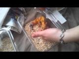 Gecko Léopard/Eublepharis Macularius Unboxing