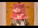 Видео к фильму «Приключения Паддингтона2» (2017): Трейлер (дублированный)