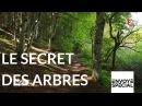 Envoyé spécial Le secret des arbres 26 octobre 2017 France 2