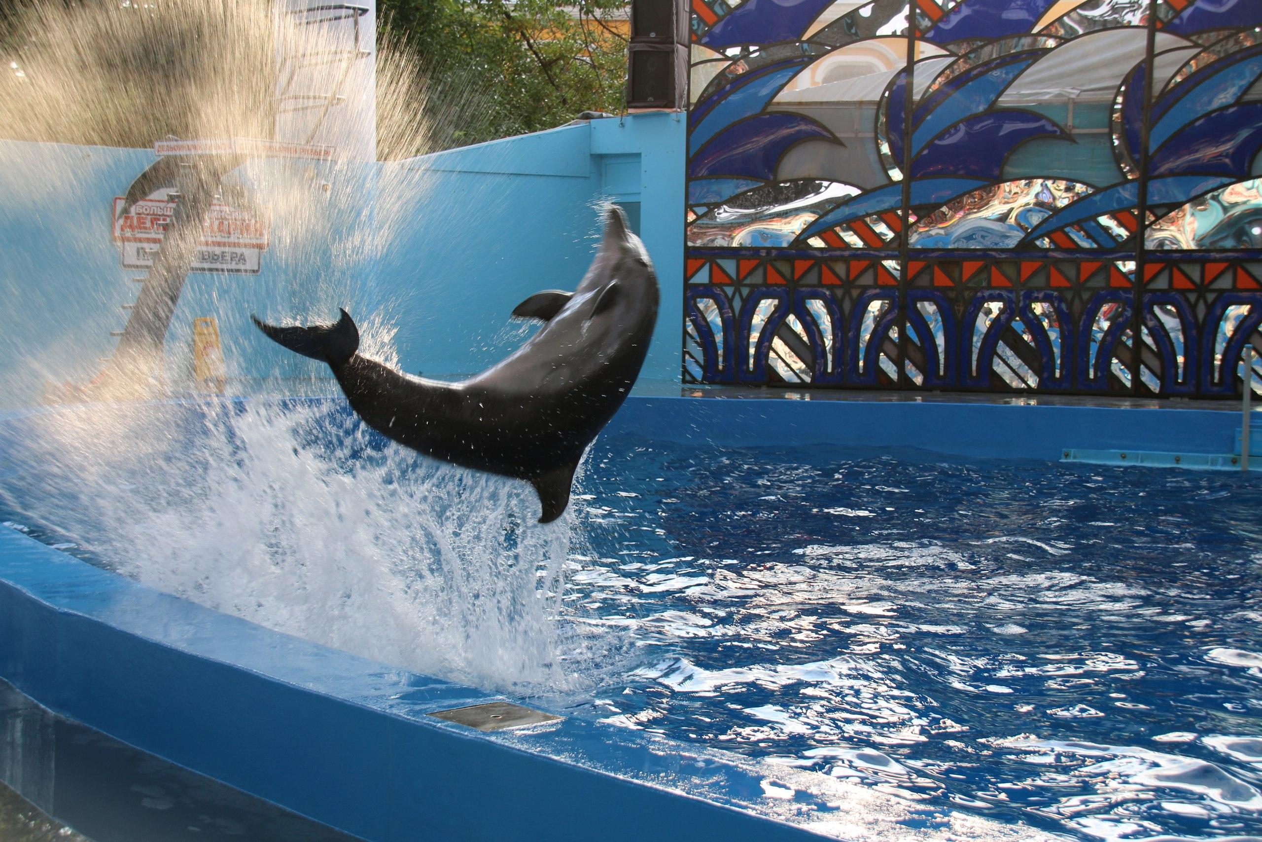 Картинки сочи дельфинов