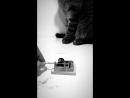 Lynn Gunn, cat and creepy sound