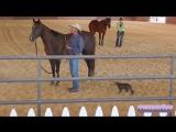Зверское нападение кота на лошадь (18+)