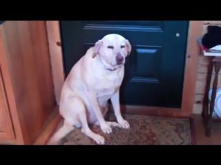 Простил бы этого пса за все, что угодно