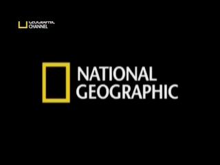 National Geographic. Город собак. Спасение питбулей