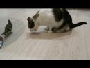 попугай и кот едят колбасу