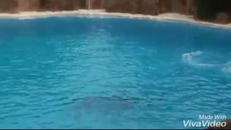 XiaoYing-delfin