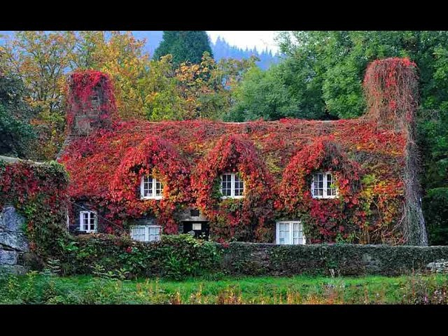 Popular traditional houses in England