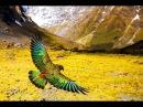 Дикие земли Неизведанный уголок природы уникальный мир животных дикая природа Новая Зеландия