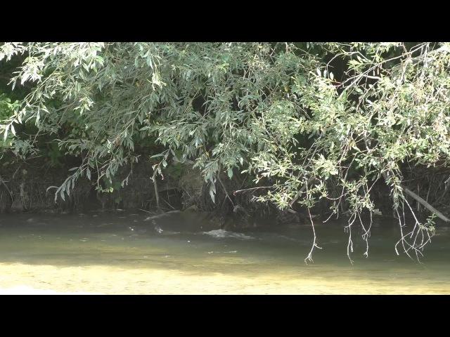 В поисках кавказской выдры Река Кума