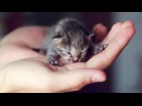 Забавные и милые коты Самое пушистое и умилительное видео