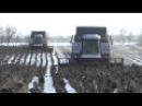 Уборка подсолнуха зима 2014 Ростсельмаш TORUM