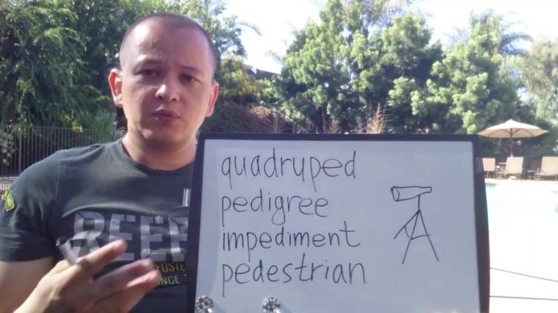 Ped - quadruped pedigree impediment pedestrian