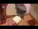 Этот кот хочет съесть всё
